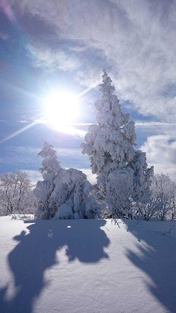 Nozawa Powder Snow